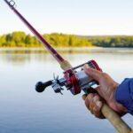 Landfiske är förbjudet på Zon 2 utanför laxodlingen där laxen samlas för att undvika felkrokning och därmed att skada fisken. Hyra båt och fiska en bit ut i älven går däremot bra på Zon 2.